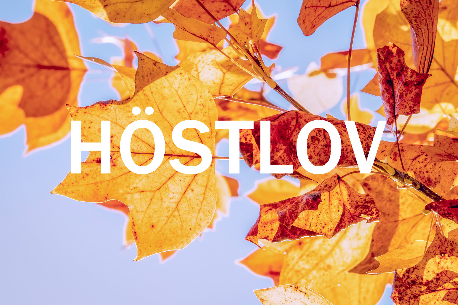 hostlov.jpg