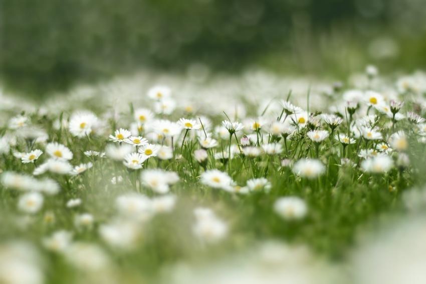 (2) sommar blommor.jpg